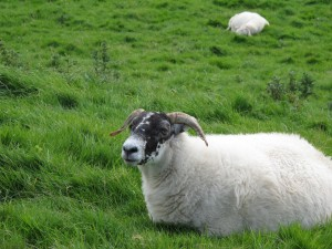 Inishbofin - Hello, new friend