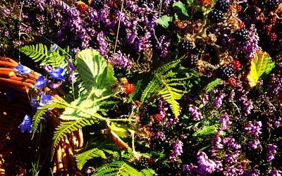 For the love of Aran Blackberries