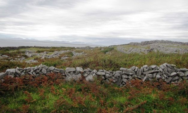 Scrub Clearance – Before and After Glanadh Scrobarnaí – Roimh & Taréis