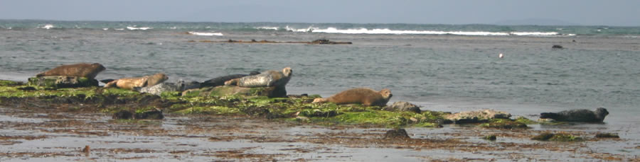 Inis Mor Island Seal Colony